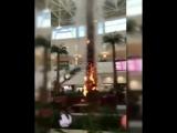 Пальма горит в Планете