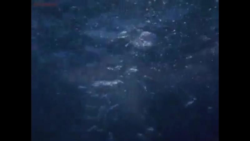 Сиротин- Мечта