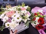 angelina_salamandra video