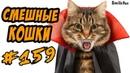 Смешные Кошки и Коты - Приколы с Котами 2018 - Funny Cats