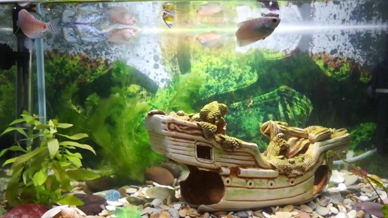 VID_20180701_013412.mp4 Мой домашний подводный мир.