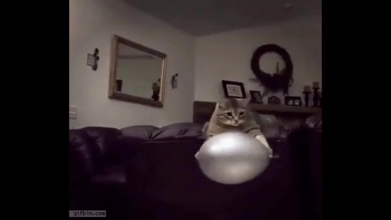 реверсивный кот