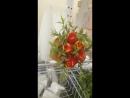 Новые формы тюльпанов