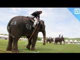 Слоны играют в пляжное поло