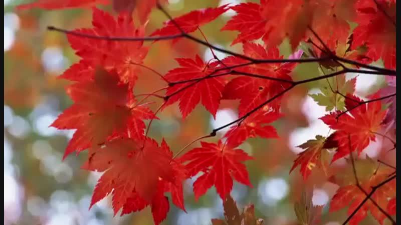 Желаю радости земной, здоровья, бодрости и счастья