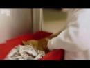 Кот метит, что делать! - Animal Planet