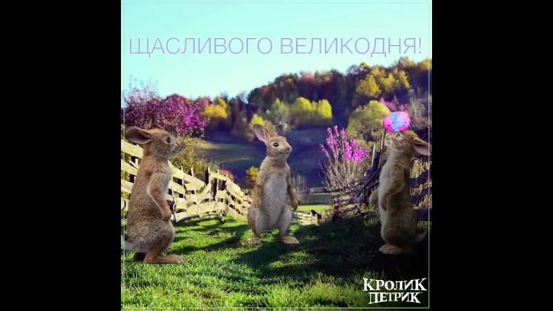 Кролик Петрик у кінотеатрі Сінема