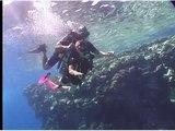 К коралловым рифам Красного моря с аквалангом. Маргарита Кузнецова