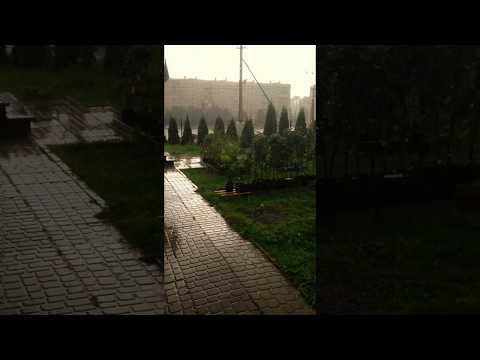 Саженцы под ливнем на ярмарке ЮНОНА. Плодовый Дом