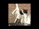 смешной котик