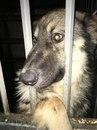 Ребята! В отлов попала собака. Очень добродушная, не агрессивная, очень милый пёс!