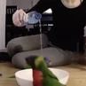 Карусель попугаев