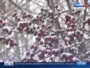 09.12.2017. Петербург ждет снежное воскресенье и, как следствие, новые пробки в понедельник