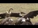 DJ Nil X-Mode - В Мире Животных _ Animal Kingdom