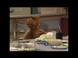Alf Quote Season 1  Episode  6_Лаки