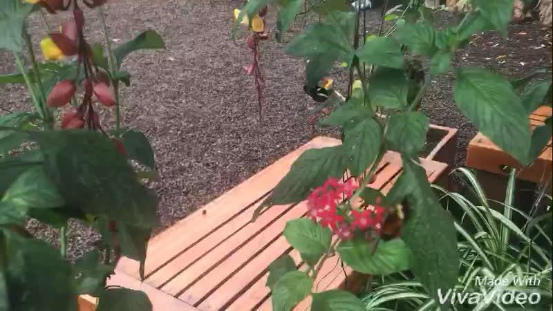 Миндо. Эквадор. Бабочки.