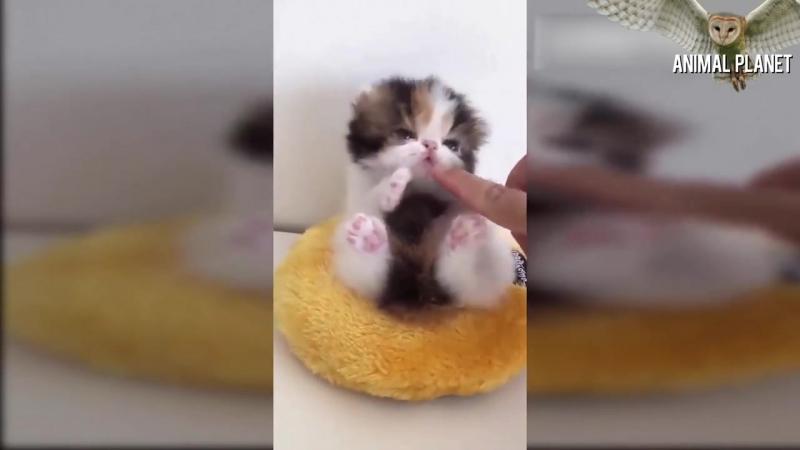 Baby Animals 🔴 Animales Bebés _ Animal Planet Videos