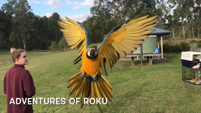 Get Flocked - Free Flight Day