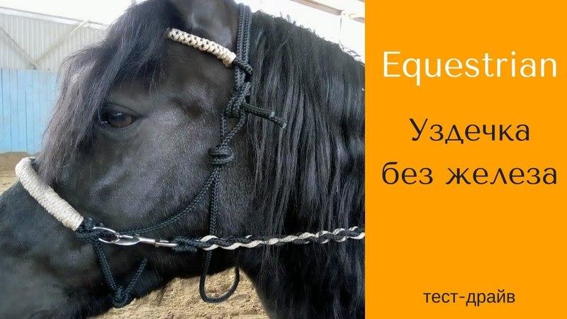 Тест-драйв уздечки от Equestrian / Дивные Кони