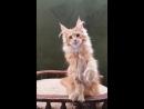 Canis Majoris Redrose 3,5 месяца
