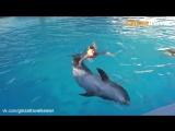 Плавание с дельфинами в Кемере    Экскурсии в Турции из Кемера от «Ginza Travel»