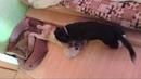 Мои любимые собачки: Ася и Тоша