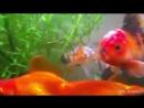 Рыбки)