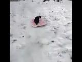 Коты  и как ни странно снег!...