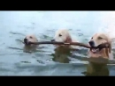 Командная работа - Собачье счастье ...