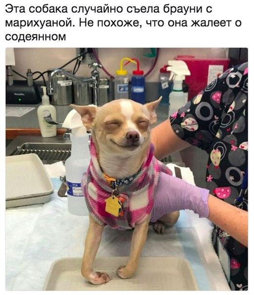 Фото №456272199 со страницы Станислава Превезенцева