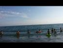 Адлер, море,дельфины, штормит,