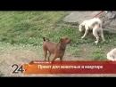 Жительница Нижнекамска организовала приют для животных в своей квартире