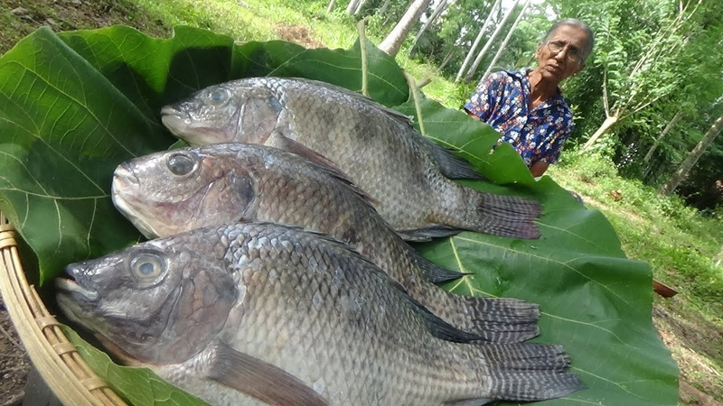 Village Food ❤ Cooking Lake Fish Curry in my Village by Grandma