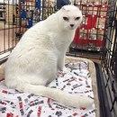 Девушка взяла из приюта глухонемого безухого старого всеми забытого кота…