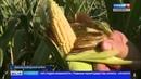 В Мордовии продолжают заготавливать корма для КРС