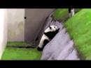 Бухая панда