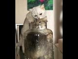 Жидкая кошка @cats_monika. Я думал она и из крана вытечет _joy_cat__heart_eyes_cat__smiley_cat_ . . . - кот - кот ( 800 X 640 ).