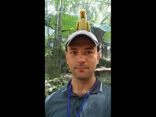 Тайский плотоядный попугай