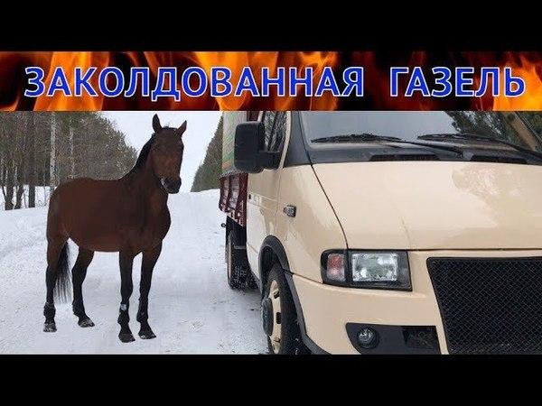 КОЛДОВСКАЯ газель ВОЗВРАЩЕНИЕ рабочей лошадки .