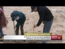 В Китае 67 летняя женщина намерена озеленить пустыню в память о сыне