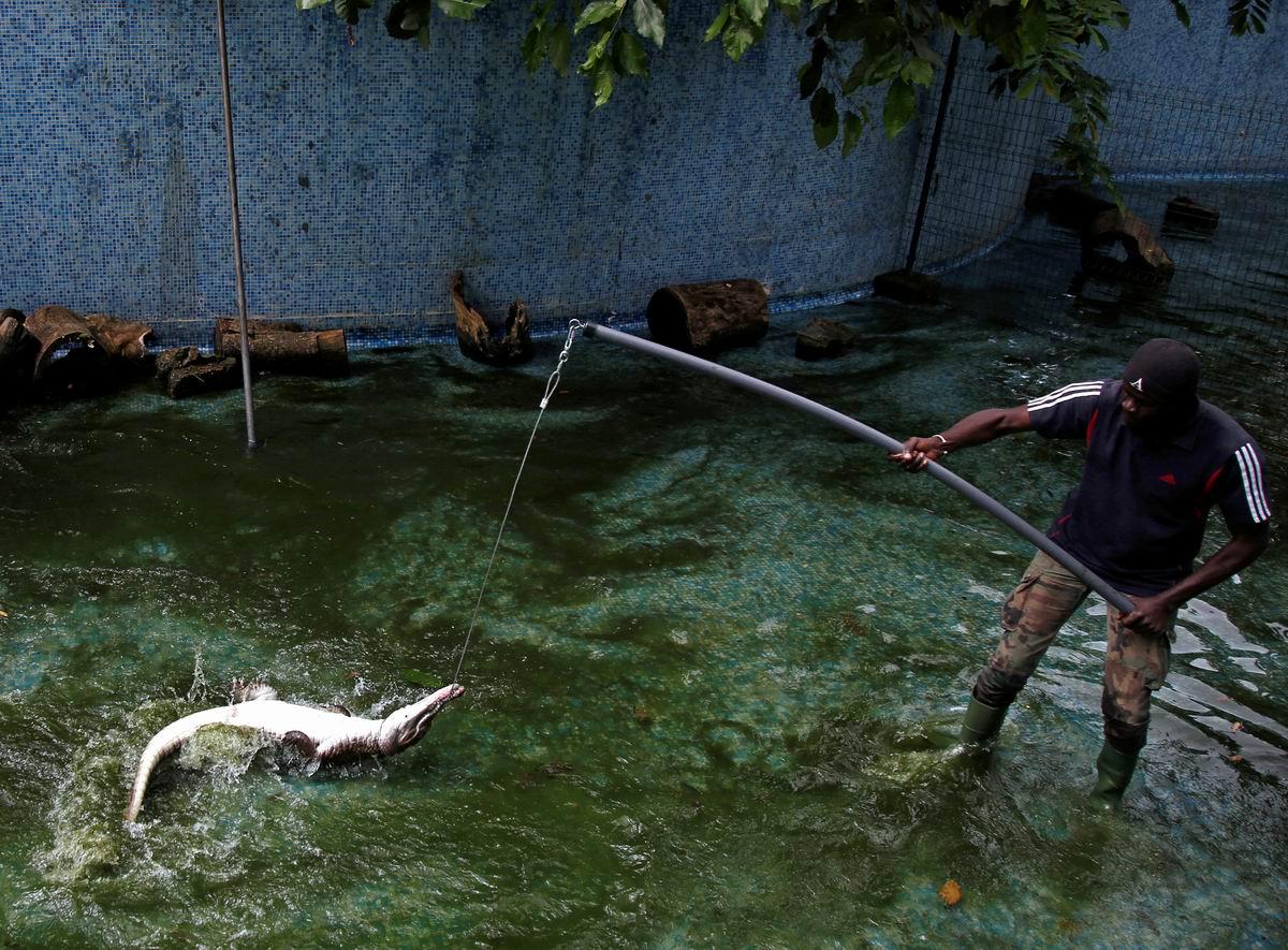 Ловись рыбка большая и крупная!: Ловец крокодилов из Кот-д'Ивуара