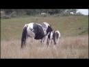 Смешное видео про лошадей