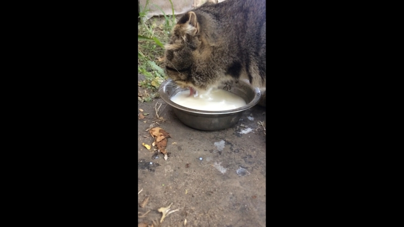 Кот ужинает (замедленка)