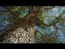 BBC Муравьиная империя Документальный природа животные 2010