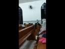 18 августа муравьи в храме ПЕРУ