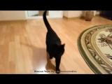 Кот открывает все двери.