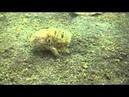 Эволюция Ходячие рыбки