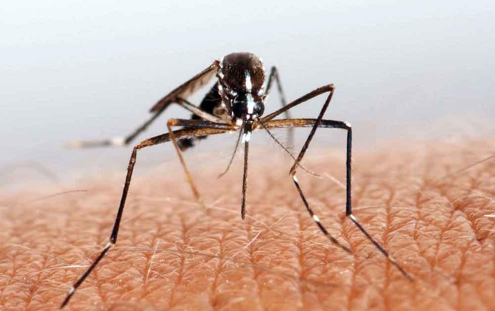 Ношение долговечных кроссовок может помочь человеку избежать укусов комаров и других насекомых.