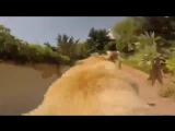 Радостный пёс бежит купаться