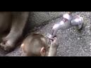 Funny Animals videos Cute Newborn Monkey Repairing The Tap